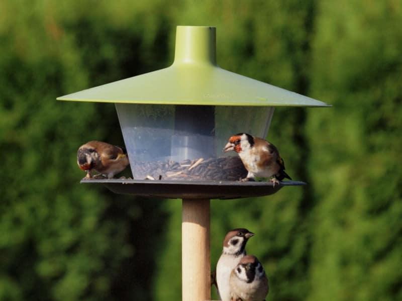 """Karmnik dla ptaków """"FINCH"""" - seria URBALIVE 3"""